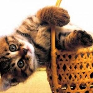malá kočička pict