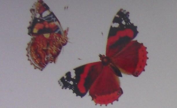služba seznamování motýlů seznamka pro retinitis pigmentosa